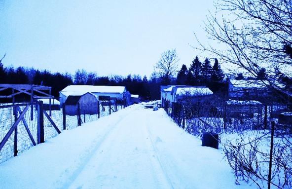 Prepare-Winter_Farm.png